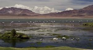 Réserve national au chili