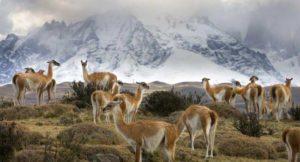parcs nationaux du Chili